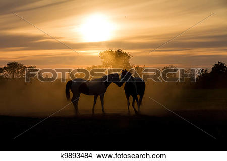 Stock Photo of Sunset love horses k9893484.