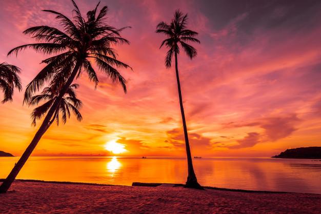 Sunset Vectors, Photos and PSD files.