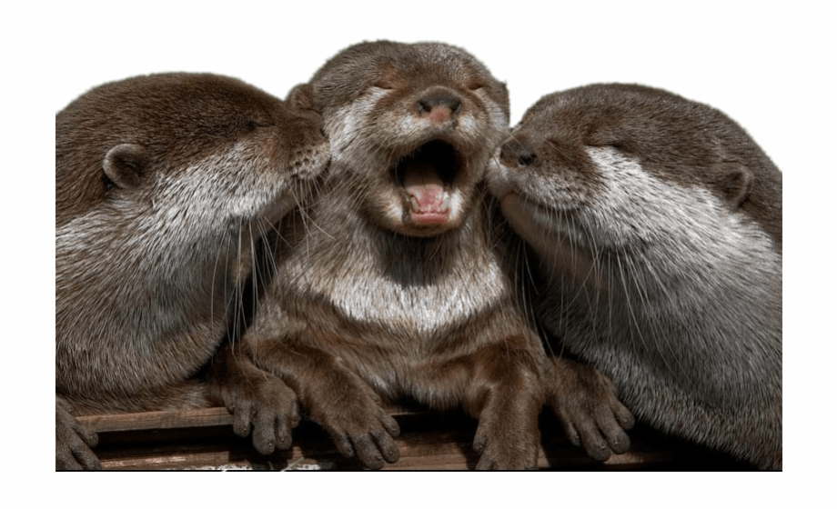 Cuddling Otters Cute Super Cute Otter.