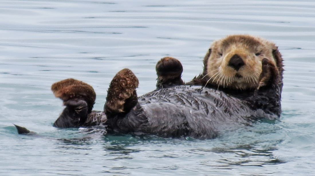 16 Playful Facts About Otters.