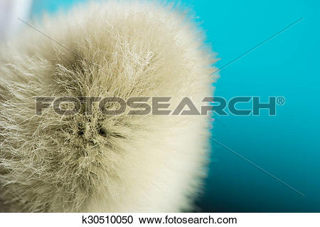 Stock Photography of Unusual macro background. Pussy.