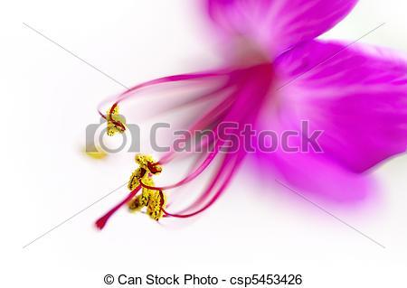 Stock Image of Geranium flower super macro , shallow depth of.