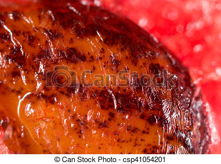 Stock Photography of watermelon seeds. Super Macro csp41054201.