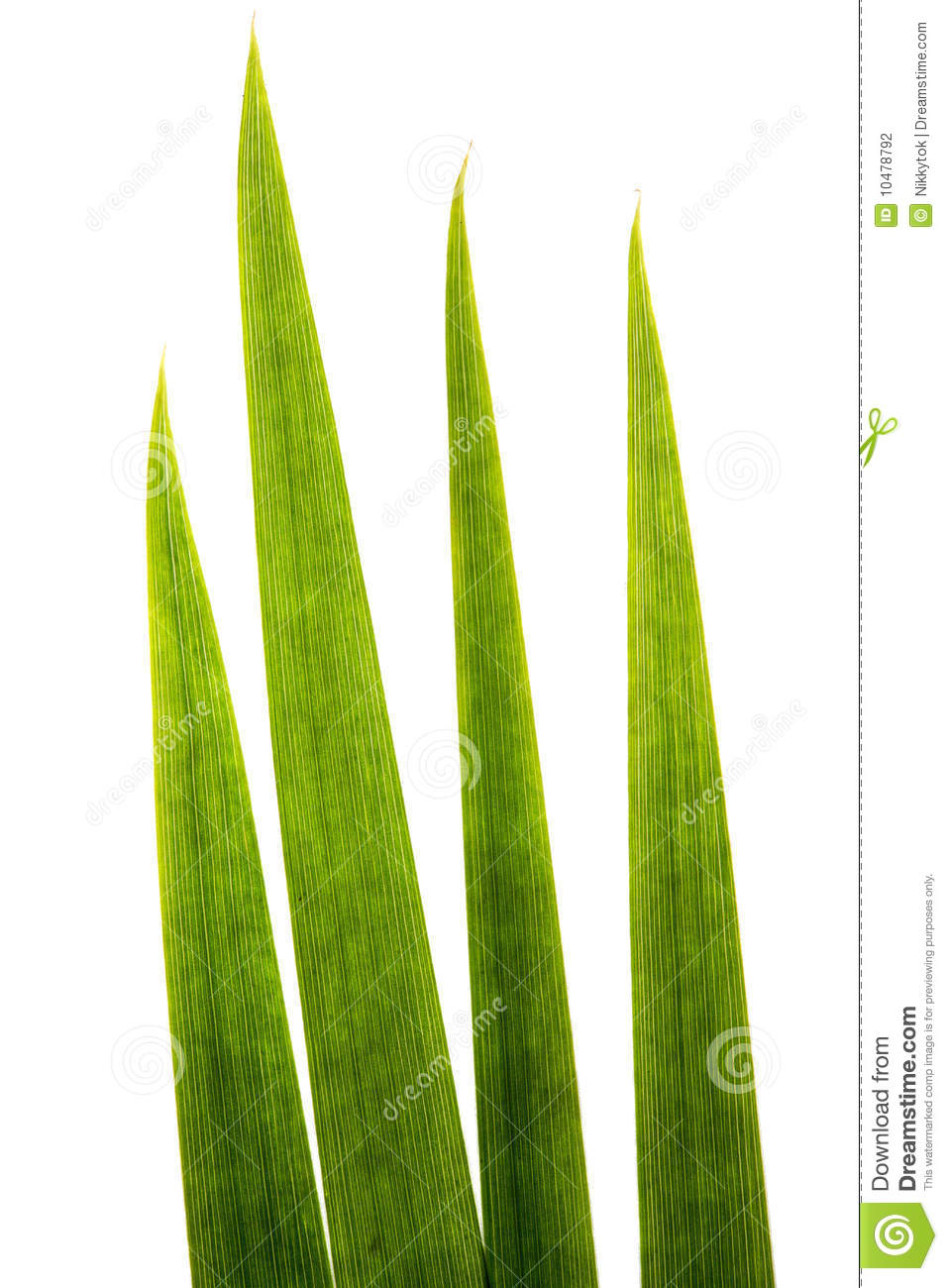 Single blade of grass clipart.