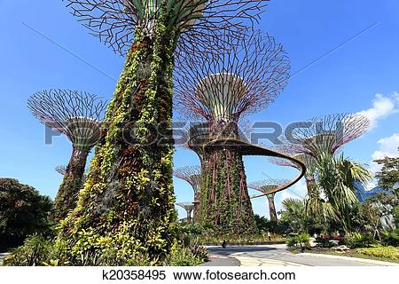 Stock Image of The Supertrees Grove at Gardens by the Bay.