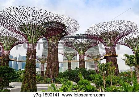 Stock Photography of The Supertree Grove at Gardens by the Bay.