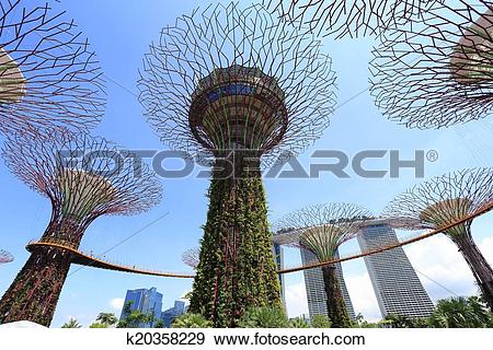 Stock Photograph of The Supertrees Grove at Gardens by the Bay.