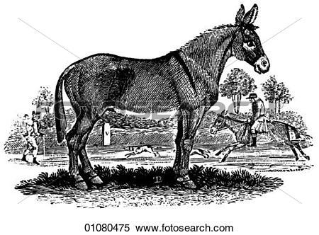 Stock Illustration of Flora & Fauna.