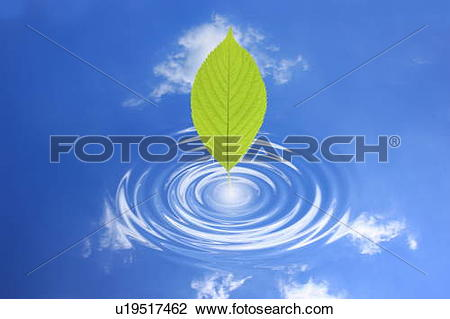 Stock Photo of Leaf touching water surface with reflections of.