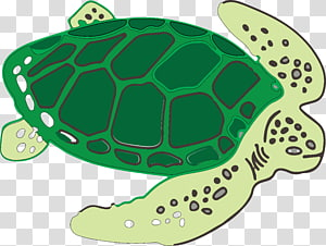 Tortoise Vector transparent background PNG cliparts free.