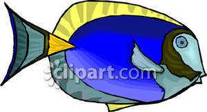 Tang Or Surgeon Fish Royalty Free Clipart Picture.