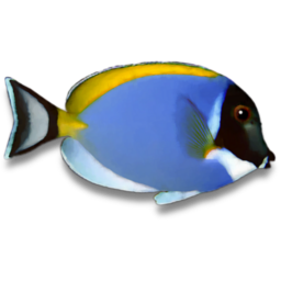 Powderblue Surgeonfish Icon.