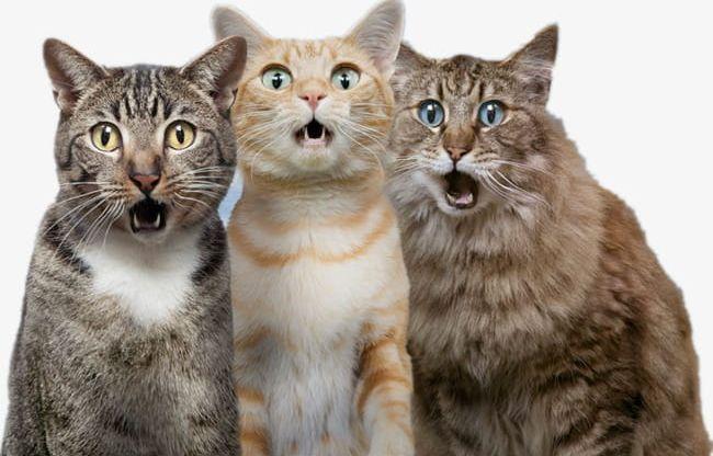Surprised Cat PNG, Clipart, Cartoon, Cat, Cat Clipart, Cat.