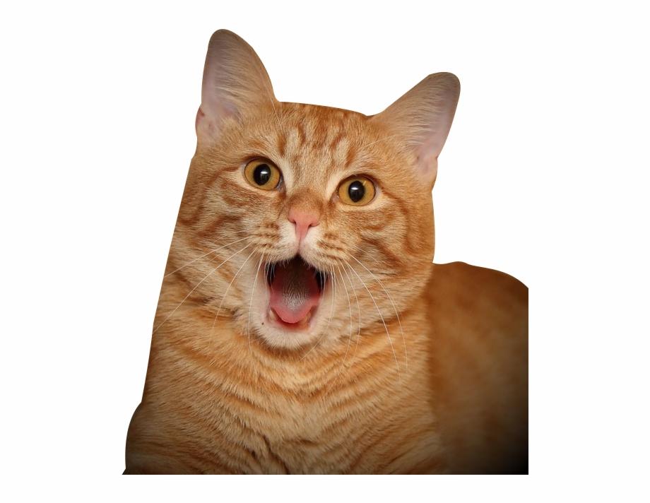 Cat Tongue Png.