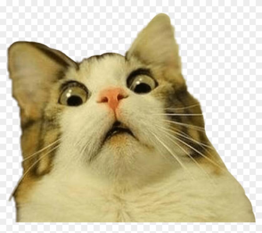 Troll Trolling Cat Meme Scared Freaked Surprised Freeto.