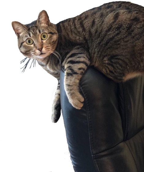 Download Surprised Cat Sitting On Chair.