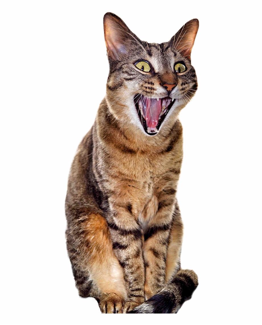 Surprised Cat [480 × 1058].