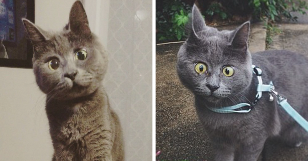 This Permanently Surprised Cat Wasn\'t Supposed To Survive.