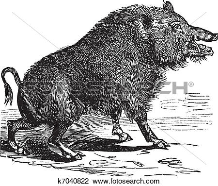 Clipart of Wild boar or Sus scrofa vintage engraving k7040822.