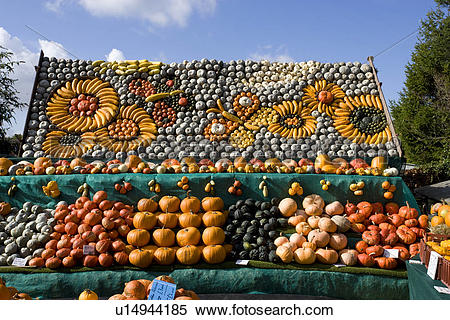 Stock Image of A display of pumpkins at Slindon West Sussex.