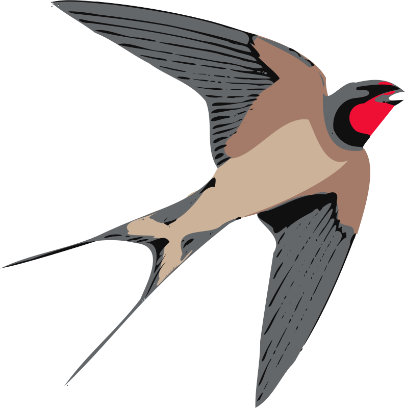 Swallow Clipart.