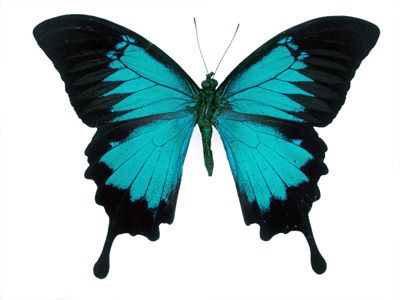 1000+ images about Mariposas on Pinterest.
