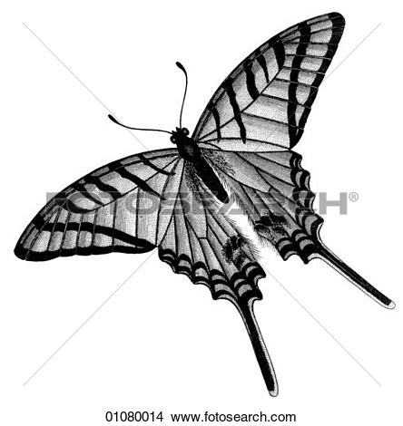 Swallow tail Illustrations and Stock Art. 73 swallow tail.