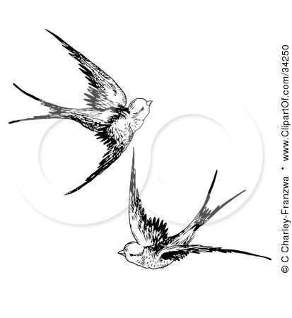 1000+ images about Swallows on Pinterest.