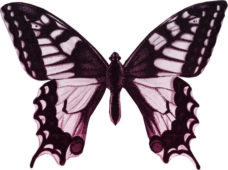 1000+ images about Butterfly images & Clipart on Pinterest.