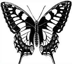 Free Swallowtail Butterfly Clipart.