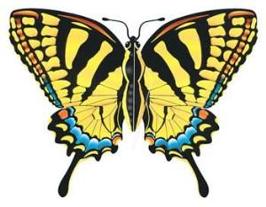 Swallowtail Butterfly Oregon.