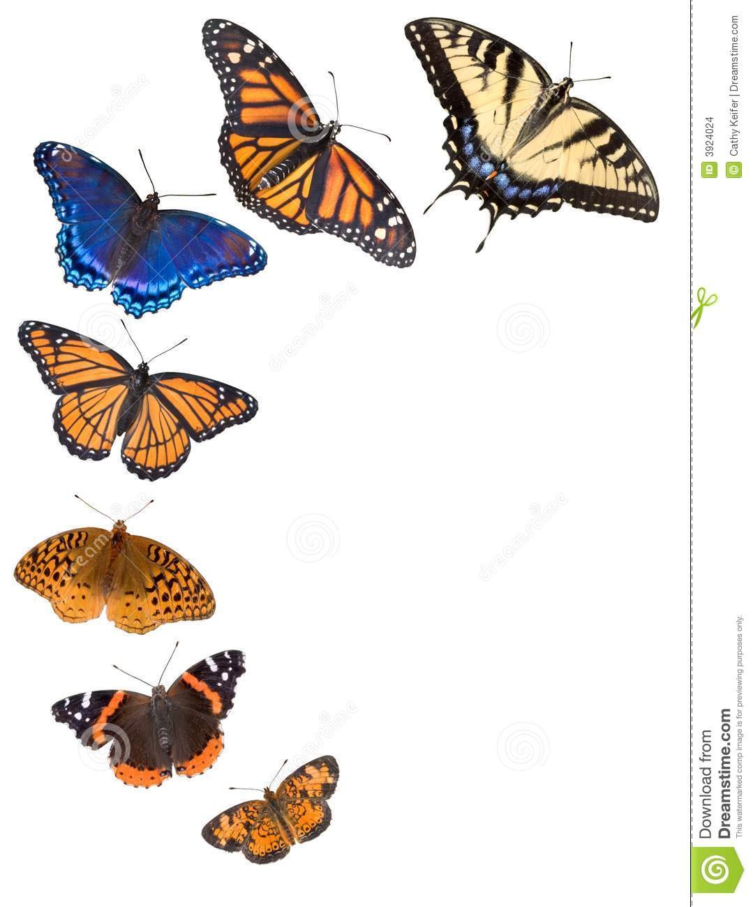Swallowtail Butterfly Border Clipart.