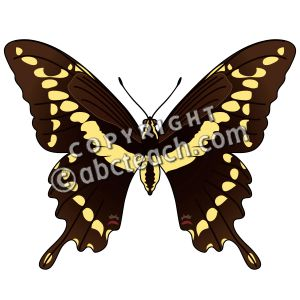 Giant Swallowtail Butterfly Clipart.