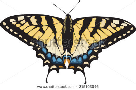 Tiger Swallowtail Butterfly Stock Photos, Royalty.