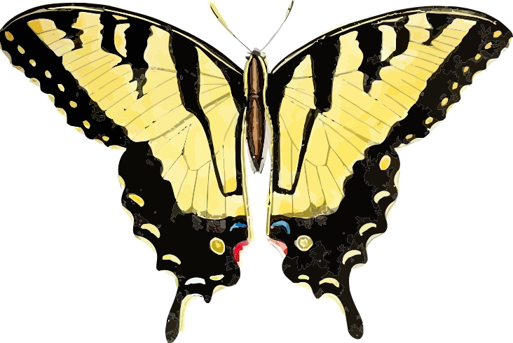 swallowtail yellow.