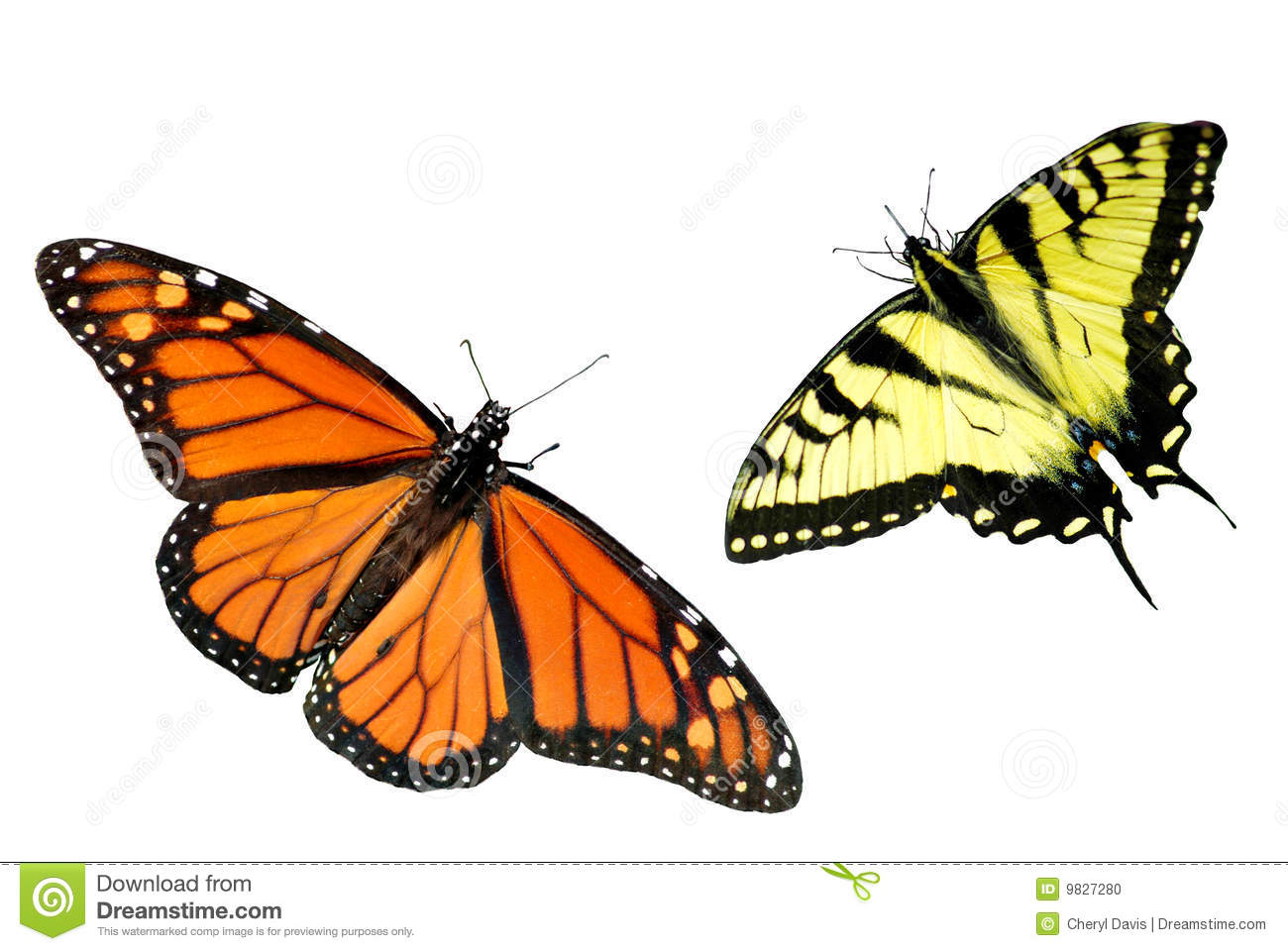 A tiger and butterfly clipart.