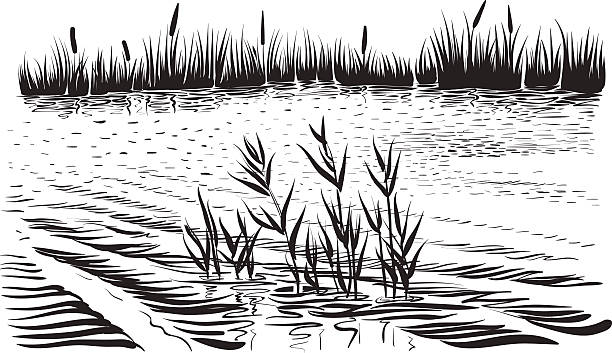 Swamp clipart black and white 2 » Clipart Station.