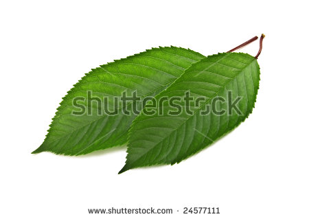 Cherries Green Leaf Two Stock Photos, Royalty.