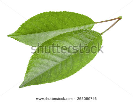 Cherry Leaves Stock Photos, Royalty.