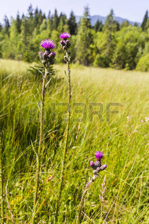 Swamp Flowers Images, Stock Pictures, Royalty Free Swamp Flowers.