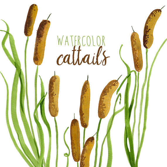 Watercolor Cattails Clipart Digital Swamp by DigitalPressCreation.