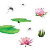 Collection Of Color Water Lily Flowers Stock Photo.