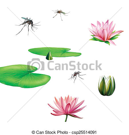 Stock Photographs of Pond swamp plants and insects: water lily.