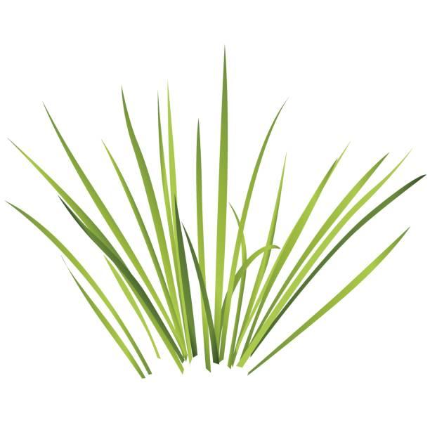 Swamp Grasses Backgrounds Clip Art, Vector Images & Illustrations.