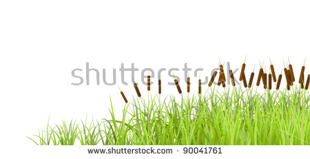 Swamp Grass Isolated Stock Images, Royalty.