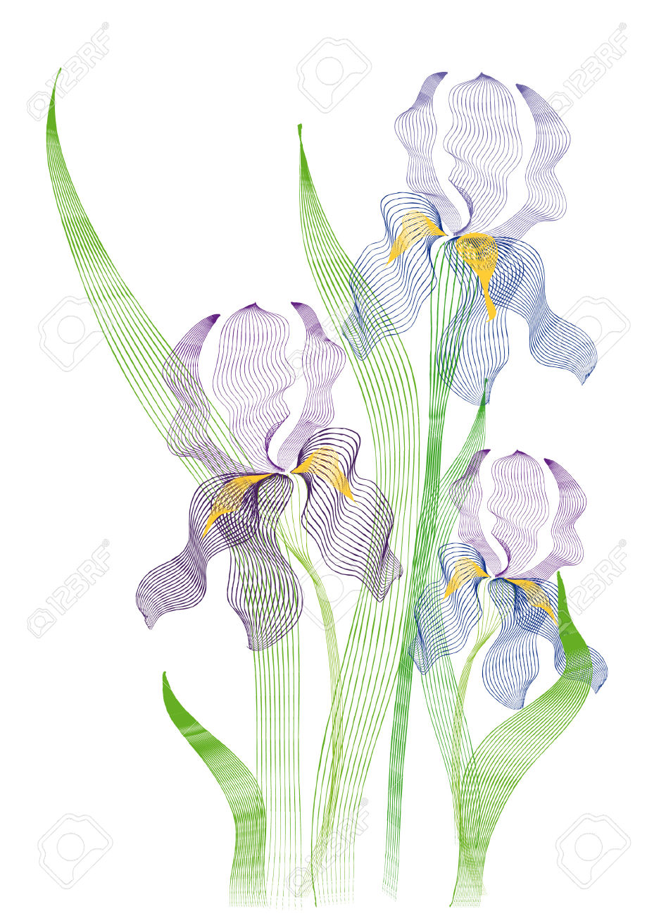 The Stylized Image Of Blue Swamp Irises Royalty Free Cliparts.