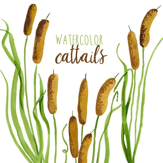 Watercolor Cattails Clipart, Digital Swamp images, Southern.