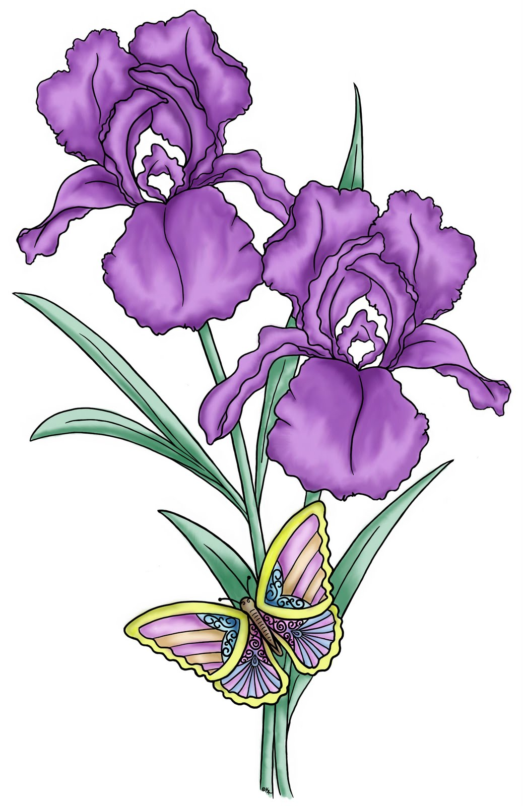 1000+ images about Irises on Pinterest.
