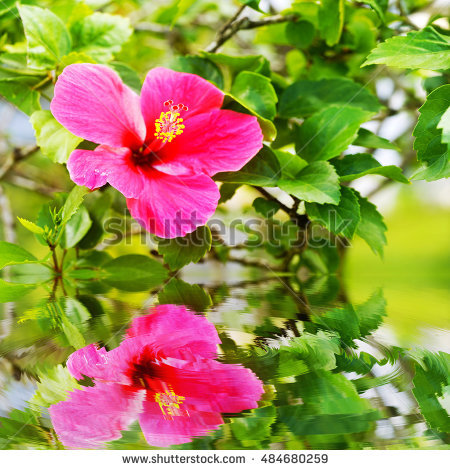 Black Background, Pink, Isolated, Nature, Blossom, Beauty, Green.