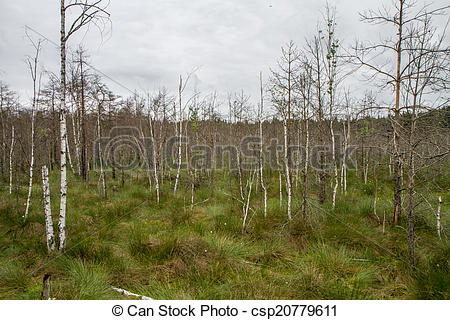 Clipart of trees in the swamp.